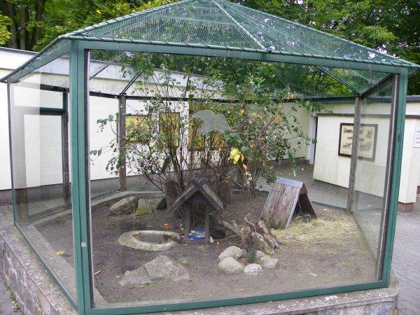 enclos des cochons d inde de mes visites de zoos